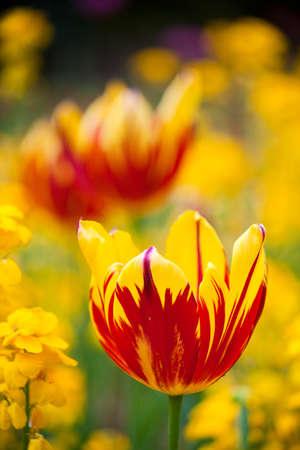 Yellow flower close upand macro.