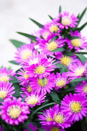 flowers in agarden in Uk. photo