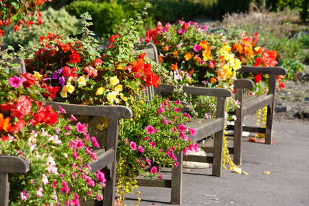Benches and flowers in a park in Uk.