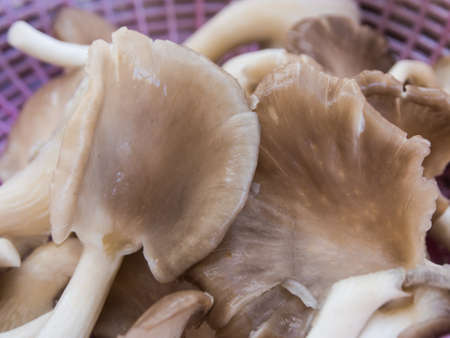 Mushroon being prepared freshly for cooking  Stock Photo - 15683071