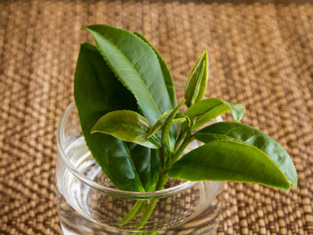 Fresh hand picked tea leaves in a glass on wooden mat Stock Photo - 16295067