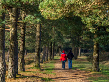 Two people walking in New forest.