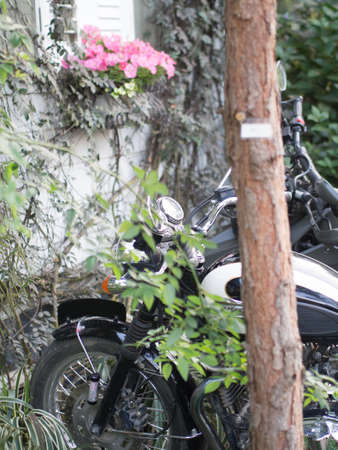 Lovely flowers in a garden and motocycle.