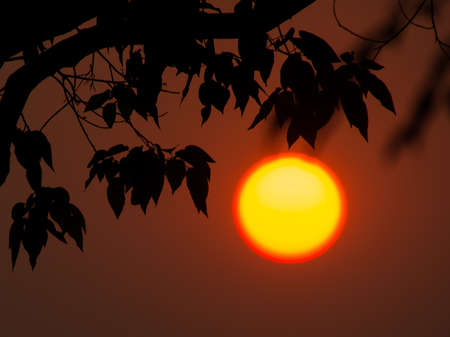 Morning atmosphere with rising sun and trees branch.