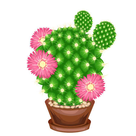 Color picture. Potted plant in a pot. The green cactus is spherical with tubercles covered with spines. Mammillaria, hymnocalicium. Lovely hobby for collectors of cacti. Vector illustration.