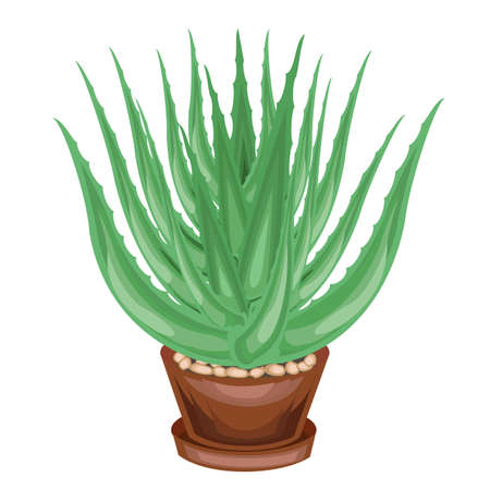 A decorative houseplant in a pot is depicted. Green leaves of aloe vera. Healing, used in medicine. A nice and unpretentious hobby for collectors of cacti. Vector illustration. Ilustrace