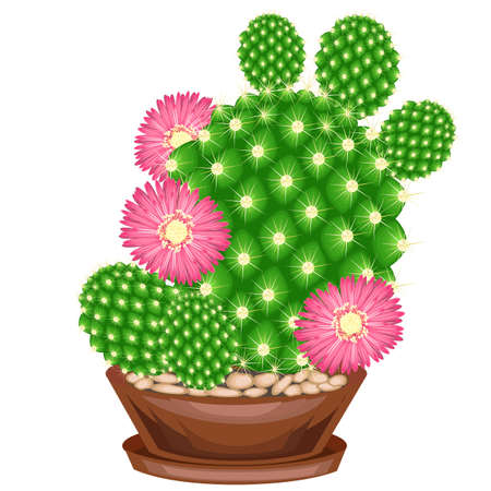 Color picture. Potted plant in a pot. The green cactus is spherical with tubercles covered with spines. Mammillaria, hymnocalicium. Lovely hobby for collectors of cacti. Vector illustration. Vector Illustratie