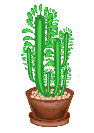 Potted plant in a pot. A few greens of branches of a succulent, a cactus. High vertical stems with facets and spines. Lovely hobby for collectors of cacti. Vector illustration.