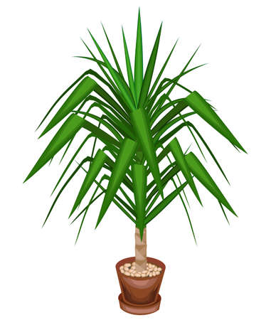 Yucca is an elephant. A beautiful evergreen plant in a pot. Home and office decoration. Evergreen tree. Vector illustration.