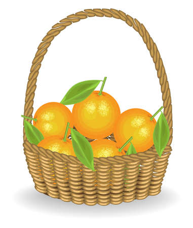 Generous harvest. Fresh juicy sweet oranges in a basket. The fruit is very tasty and vitamin. An exquisite treat for health and pleasure. Vector illustration.