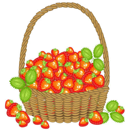 Collected a generous harvest. A basket full of ripe juicy berries. Fresh beautiful red strawberry, a source of vitamins and pleasure. Vector illustration.