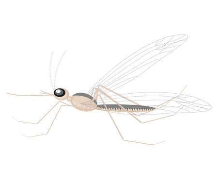 A mosquito, a small insect, sucking blood. It hurts a person, carries an infection. Almost all over the planet. Vector illustration.  イラスト・ベクター素材