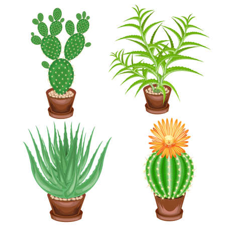 Color picture. A collection of houseplants in pots. Crassula, aloe vera, prickly pear, Mammillaria. Lovely hobby for collectors of cacti. Home and apartment decoration. Vector illustration.
