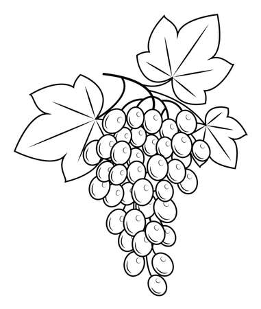 A branch is a beautiful grape berry, a tasty plant. Useful juicy berries. Graphic image. Vector illustration. Banque d'images - 122651798