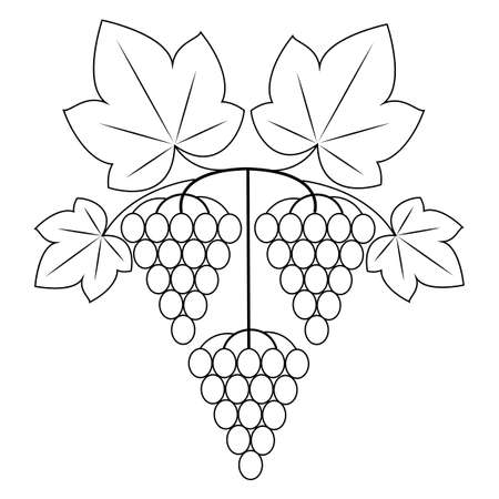 A branch is a beautiful bunch of grapes, a tasty plant. Useful juicy berries. Graphic image. Vector illustration. Banque d'images - 122651879