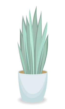 Indoor plant in a beautiful pot. Adult Sansevier, large leaves. Vector illustration. Çizim