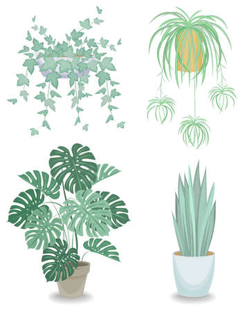 Collection. Indoor plant in a pot. Chlorophytum, monster, sansevieria, ivy. Beautiful decorative flowerpot. Vector illustration of a set Ilustração