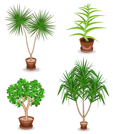 Collection. Indoor plant in a pot. Yucca, scarlet faith, dracaena. Beautiful decorative flowerpot. Vector illustration of a set