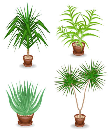 Collection. Indoor plant in a pot. Yucca, scarlet faith, dracaena. Beautiful decorative flowerpot. Vector illustration of a set.