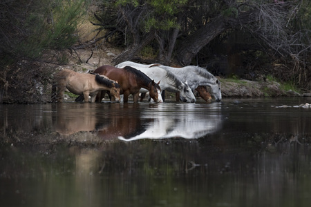 Wild Horses casting a reflection in the river