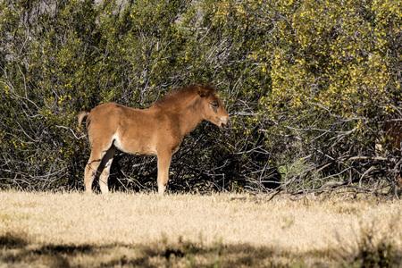 Wild Horse colt scratching an itch