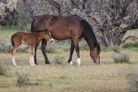 Wild mare and her colt Stock Photo