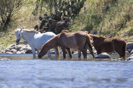 Wild Horses in the river Reklamní fotografie