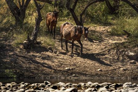 Wild Horses Reklamní fotografie