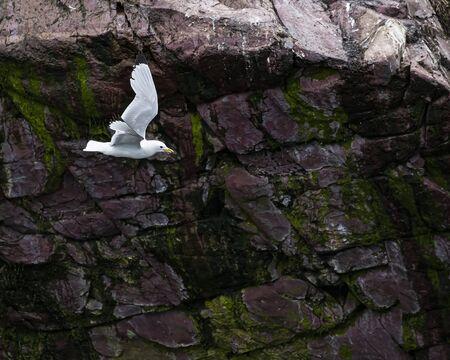 Sea Gulls 写真素材