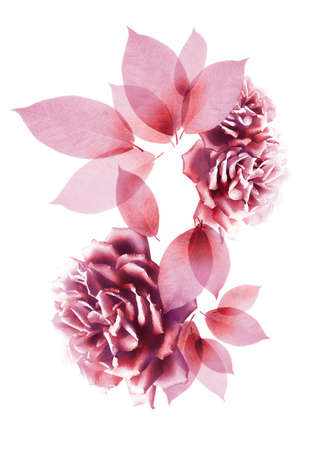 composite: Composite flower and leaves