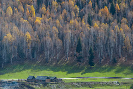 xanadu: Hemu birch trees and houses at the foot of the mountain, like Xanadu.