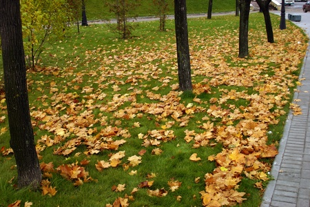 Many autumn yellow leaves on green lawn photo