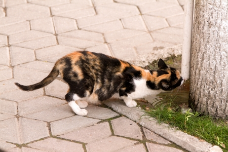 clever tricolor cat drink water condensation of air conditioners