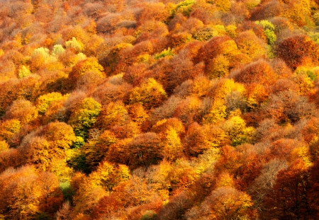 Autumn forest in the mountains of the North Caucasus Stock Photo