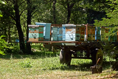 Row of old colorful wooden beehives in the trailer (forest)
