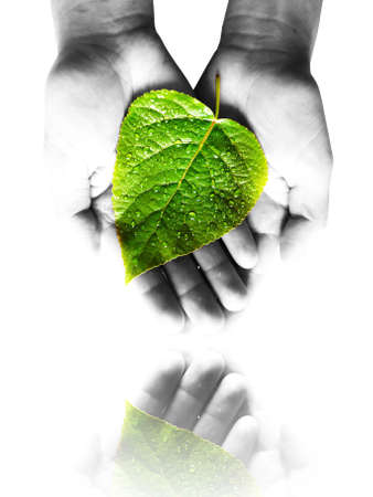 replant:  care for the plants Stock Photo