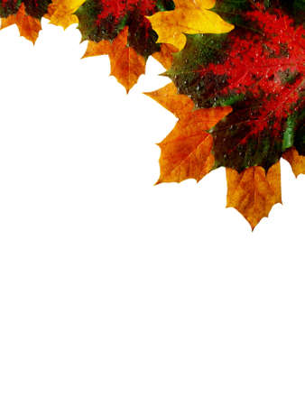 autumn corner made from maple leaves photo