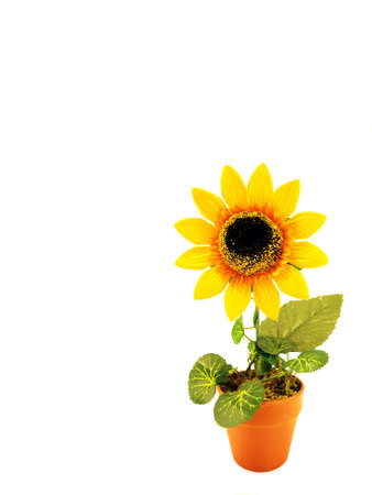 artificial sunflower in the pot          photo