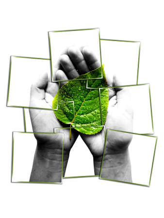 photo collage.green leaf in human hands