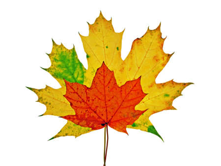 vivid colorful autumn leaves isolated on white background Stock Photo - 5511817