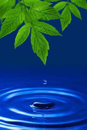 environmental abstract background. green leaves and blue water drop photo