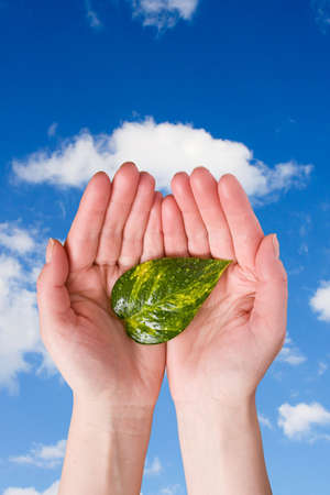 conceptual care of plants. hands holding leaf on sky background Stock Photo - 6786181
