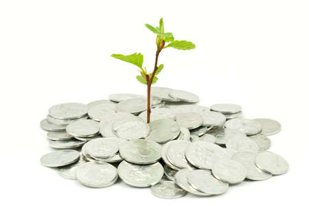 financial growth: financial growth concept. plant in coins over white