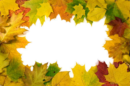 vivid autumnal leaves frame for your text   photo