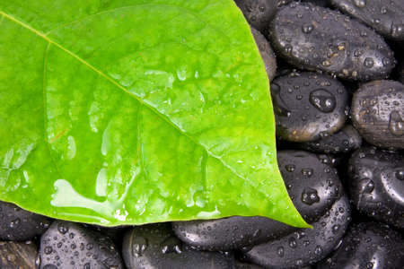 green leaf and zen stones after rain.