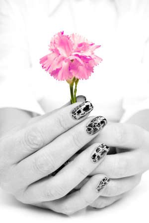 female hands holding beutiful pink carnation flower. photo