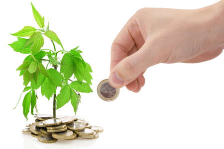 Hand and green plant growing from the coins. Stock Photo