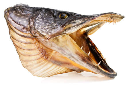 pike: Fishing trophy. pike fish head over white background