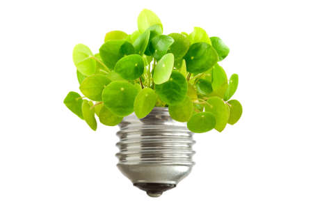 ecological concept. green plant growing out of a bulb, isolated on white background photo