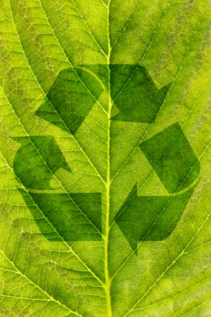 ecological recycling concept.  recycle symbol on green leaf texture photo